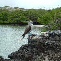 Najlepszy czas na odwiedzenie Wysp Galapagos
